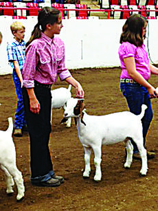 "<div class=""source""></div><div class=""image-desc"">Abby Hazelwood is showing her goat in the showmanship championship drive recently at the 4-H Livestock Skillathon in Bowling Green. </div><div class=""buy-pic""><a href=""/photo_select/29881"">Buy this photo</a></div>"
