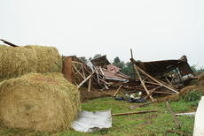 "<div class=""source"">Linda Ireland</div><div class=""image-desc"">The Rock family's dairy barn was destroyed in Wednesday's storm.</div><div class=""buy-pic""><a href=""/photo_select/28630"">Buy this photo</a></div>"