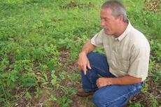 """<div class=""""source"""">Ron Benningfield</div><div class=""""image-desc"""">Marty Stillwell gets down close to the ground to spot tasty mushrooms known in Kentucky as dryland fish.</div><div class=""""buy-pic""""><a href=""""/photo_select/5885"""">Buy this photo</a></div>"""