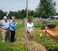 """<div class=""""source"""">Ron Benningfield</div><div class=""""image-desc"""">While her parents Wilma and Gordon McDowell watch, Patty Holbert feeds hay to her 6-year-old Guernsey Mattie on her family farm that her son Andy now owns. Holbert is only the second female to be hired in her position by the American Jersey Cattle Association.</div><div class=""""buy-pic""""><a href=""""/photo_select/15104"""">Buy this photo</a></div>"""