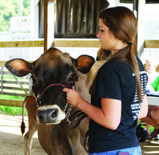 """<div class=""""source"""">Photo by Linda Ireland</div><div class=""""image-desc"""">Bethany Akin competed in Senior Showmanship at the LaRue County Fair Dairy Show.</div><div class=""""buy-pic""""><a href=""""/photo_select/28739"""">Buy this photo</a></div>"""