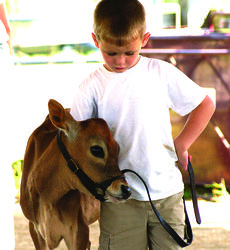 """<div class=""""source"""">Photo by Linda Ireland</div><div class=""""image-desc"""">Cyrus Bivens showed his Jersey junior calf in the LaRue County Fair Show.</div><div class=""""buy-pic""""><a href=""""/photo_select/28736"""">Buy this photo</a></div>"""