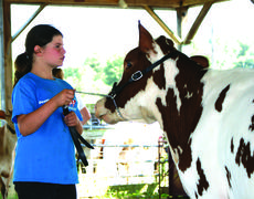 """<div class=""""source"""">Photo by Linda Ireland</div><div class=""""image-desc"""">Destiny Byrd competed in Senior Showmanship at the LaRue County Fair Dairy Show.</div><div class=""""buy-pic""""><a href=""""/photo_select/28742"""">Buy this photo</a></div>"""