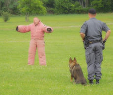 """<div class=""""source"""">Ashley Scoby</div><div class=""""image-desc"""">The K-9 version of a Kentucky state trooper, """"Fero,"""" eyes his prey, as the dog's handler stands beside him, ready to give the order for Fero to apprehend the """"suspect.""""</div><div class=""""buy-pic""""><a href=""""http://web2.lcni5.com/cgi-bin/c2newbuyphoto.cgi?pub=029&orig=dog%2Btensed.jpg"""" target=""""_new"""">Buy this photo</a></div>"""