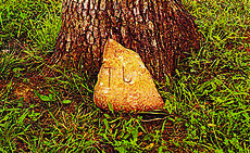 """<div class=""""source""""></div><div class=""""image-desc"""">The stone that marked the grave of Abraham Lincoln's brother will be donated to the National Park Service.</div><div class=""""buy-pic""""><a href=""""/photo_select/33094"""">Buy this photo</a></div>"""