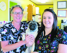 """<div class=""""source"""">Ron Benningfield</div><div class=""""image-desc"""">Holding their pug patient Wilbur, owned by Mallory Skaggs of Hodgenville, are, Carol Tucker, left, and Harley Walters, part of the LaRue County Animal Clinic staff.</div><div class=""""buy-pic""""><a href=""""/photo_select/45583"""">Buy this photo</a></div>"""