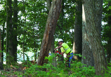"""<div class=""""source"""">Linda Ireland</div><div class=""""image-desc"""">Merle Roof, an employee for Asplundh, cut an unsafe tree at Little Mount Cemetery in the Leafdale section. </div><div class=""""buy-pic""""><a href=""""/photo_select/36723"""">Buy this photo</a></div>"""
