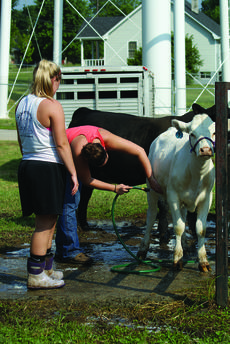 """<div class=""""source"""">Photo by Linda Ireland</div><div class=""""image-desc"""">Sisters Courtney Stephens and Chelsy Stephens of Monroe County washed their calf before entering it in Saturday's Beef Cattle Show at the LaRue County Fairgrounds.</div><div class=""""buy-pic""""><a href=""""/photo_select/28740"""">Buy this photo</a></div>"""