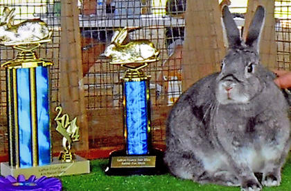 "This mini satin senior doe won the title ""Best In Show."""