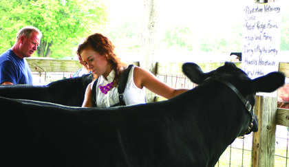Ashley Hornback of Magnolia was the winner of senior showmanship in the FFA beef cattle show.