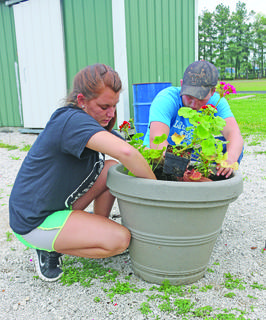 FFA members Felicia Hornback and Turner Cottrell planted geraniums in pots to be placed around Lincoln Square. They had extra flowers at the end of the school year that weren't sold through the greenhouse, and didn't want them to go to waste. They are hoping to plant some flowers around Sunrise Manor Nursing Home as well.
