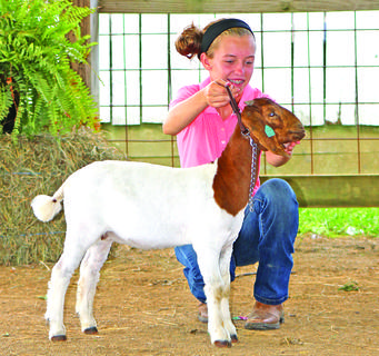 Alexis Grimes poses her goat and gets ready for the judge's inspection.