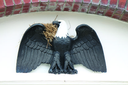 A bird has made its nest on the wing of the Hodgenville Post Office's bald eagle emblem. It looks like the eagle is peeking in the nest.