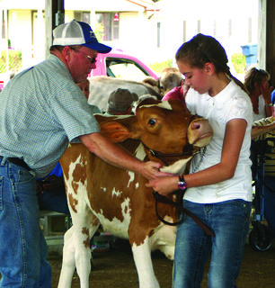 Ricky Hines, superintendent of the open dairy cattle show, assisted Lindsey Sweet of Canmer with her guernsey calf.