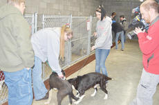 """<div class=""""source"""">Calen McKinney</div><div class=""""image-desc"""">Several people adopted pets from the Taylor County Animal Shelter during Tuesday's protest.</div><div class=""""buy-pic""""><a href=""""/photo_select/26030"""">Buy this photo</a></div>"""
