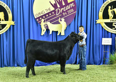 "<div class=""source"">Photo by Pearls Pics, on behalf of the American Angus Association.</div><div class=""image-desc"">Voyager JF Georgina 867 won the bred-and-owned heifer class 6 at the 2018 National Junior Angus Show (NJAS) on July 10-13 in Madison, Wisconsin Jacob Marksbury of Buffalo owns the winning heifer.</div><div class=""buy-pic""><a href=""/photo_select/60268"">Buy this photo</a></div>"