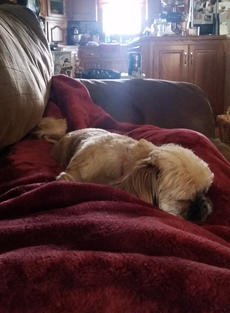 "<div class=""source"">Photo by Doug Ponder</div><div class=""image-desc"">Charlie, sleeping on my stomach while I lay on the couch.</div><div class=""buy-pic""><a href=""/photo_select/56401"">Buy this photo</a></div>"