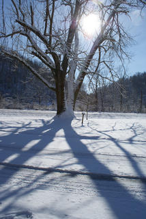 The winter sun cast shadows through a large tree near Abraham Lincoln Boyhood Home at Knob Creek.