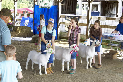 The LaRue County Fair Sheep Show contestants.