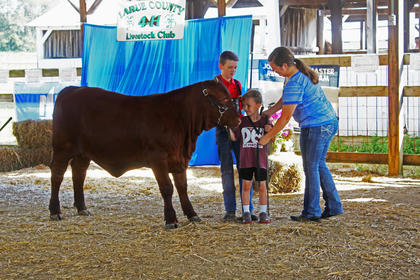 Cody Heath, Ty Heath, and Ashton Hilton during the Beef Cattle Show.