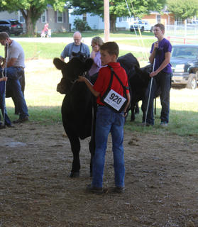 Cody Heath in the show ring during the LaRue County Fair Beef Cattle Show on August 3.