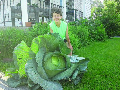 Gabe Fortier, a third-grader at Abraham Lincoln Elementary School, grew this cabbage as part of Bonnie Plants' scholarship program. The cabbage weighs 27-pounds. Gabe is under consideration for a $1,000 scholarship.