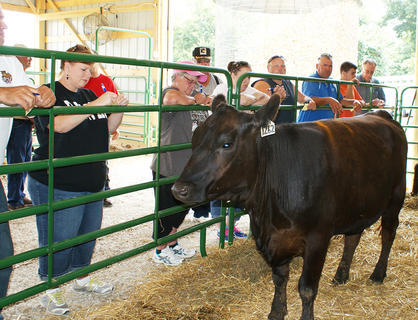 Several people, including Tracy Tharp, Larry Howell, Kyle DeVary and John Poteet tried their hand at cattle-judging at R&K Angus Farms Saturday.