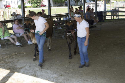 Alli and Jaylin Patterson leading their cattle out of the show ring.