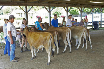 The contestants of the LaRue County Open Dairy Cattle Show Show on August 2.