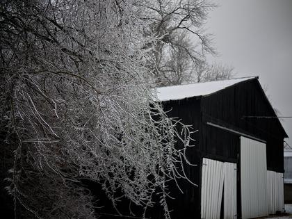 This shot of ice-covered branches beside a barn was taken near Sonora.