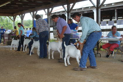 The contestants of the LaRue County Open Fair Goat Show lined up and ready to go. Pictured from the left are Avery Turner, Kaylee Haycraft, Alana Thomas, Nicholas Thomas, and Nathaniel Thomas.