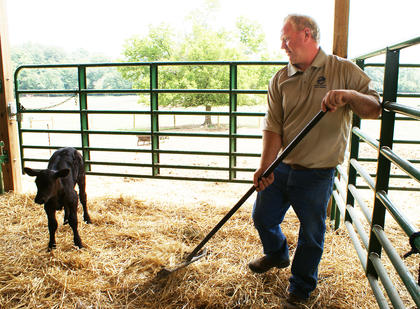 Mucking out a stall is part of daily life on an Angus farm. Kelly Flanders of R&K Angus Farms keeps the barn clean for visitors during AGstravaganza.