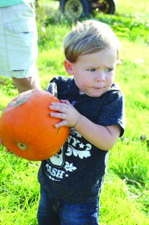 "3rd Place:""Keegan picking his own pumpkin"" taken by Kelsey Higgins"